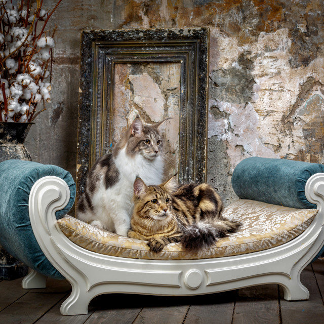 """""""Two beautiful cats on the sofa"""" stock image"""