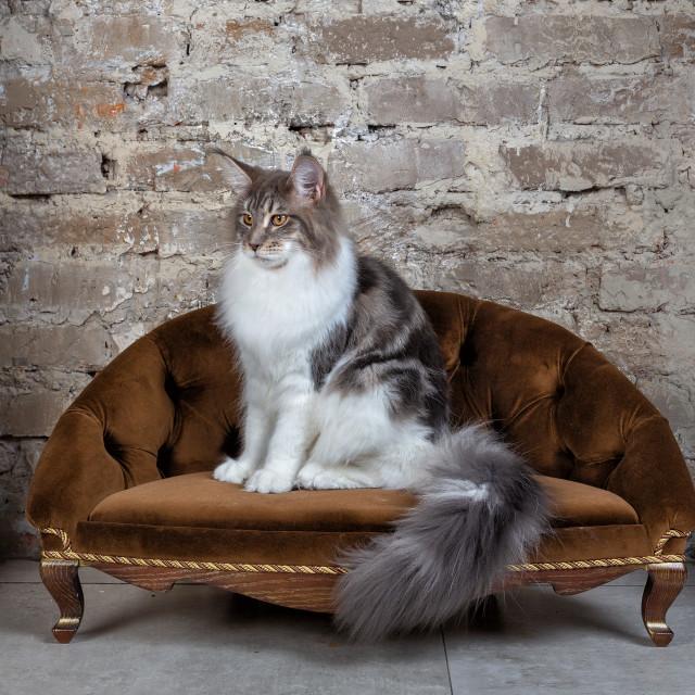 """Beautiful cat on the sofa"" stock image"