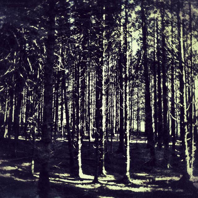 """""""Spooky woods II"""" stock image"""