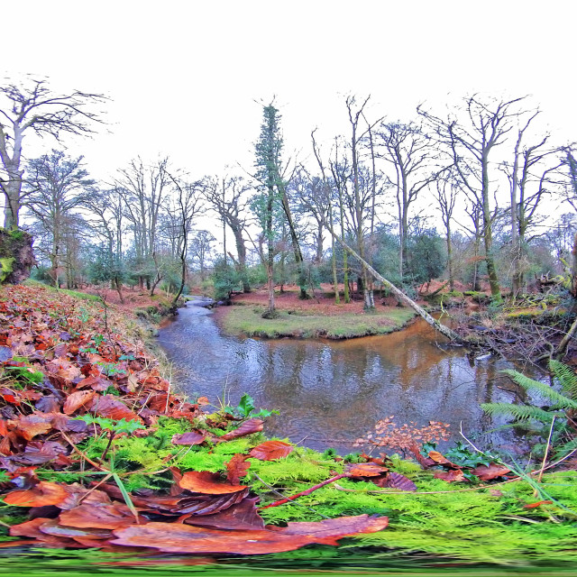 """""""New Forest Stream in Winter (Equirectangular 360vr)"""" stock image"""
