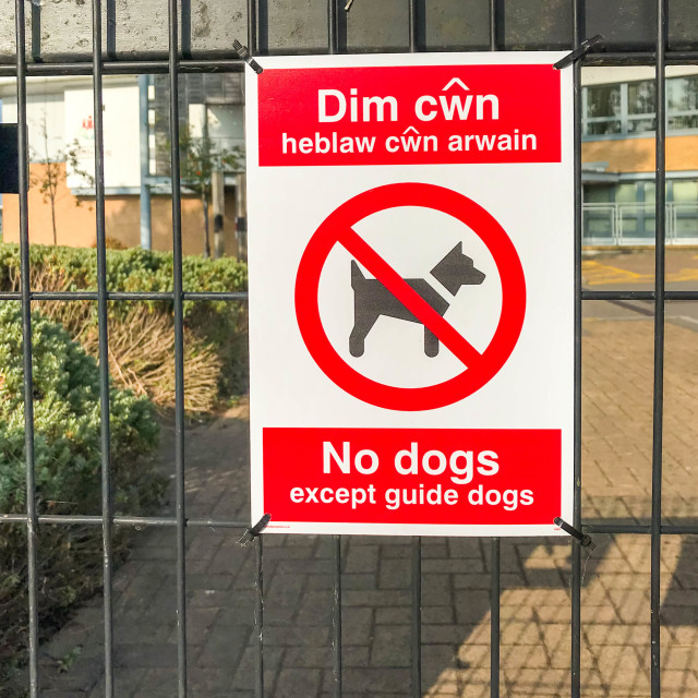 """""""Close up view of a """"No dogs"""" sign on the gate of a school"""" stock image"""