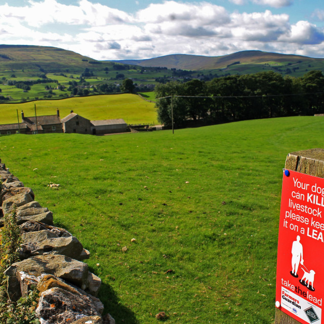 """Dogs and the Dales"" stock image"