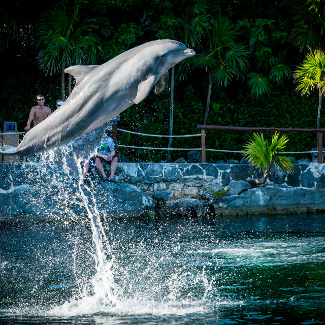 """Dolphin jumping in Xel Ha resort"" stock image"