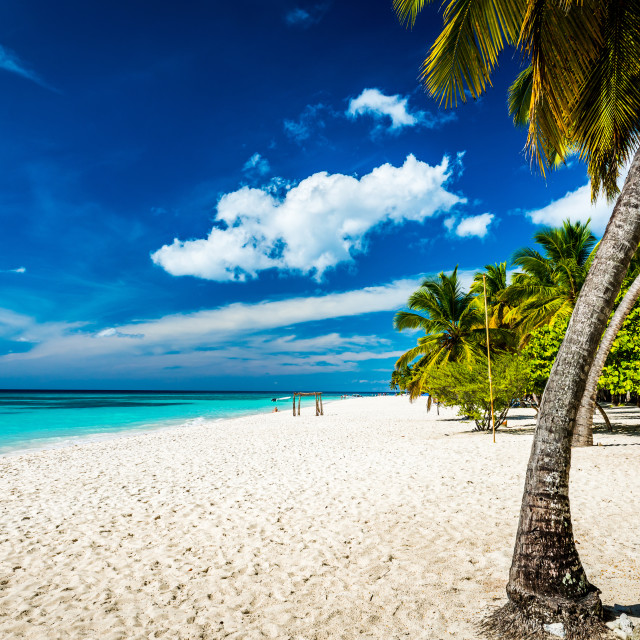 """""""Palm tree on the beach in Punta Cana"""" stock image"""