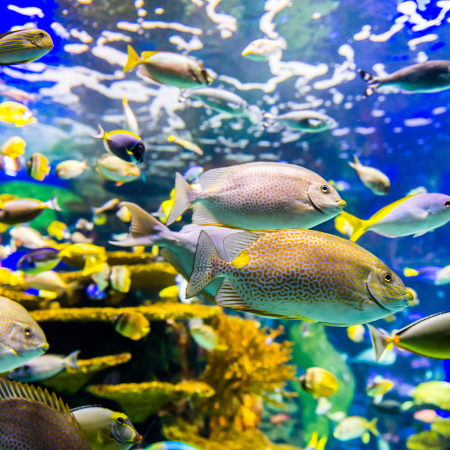 """Tropical fish at the Toronto aquarium"" stock image"
