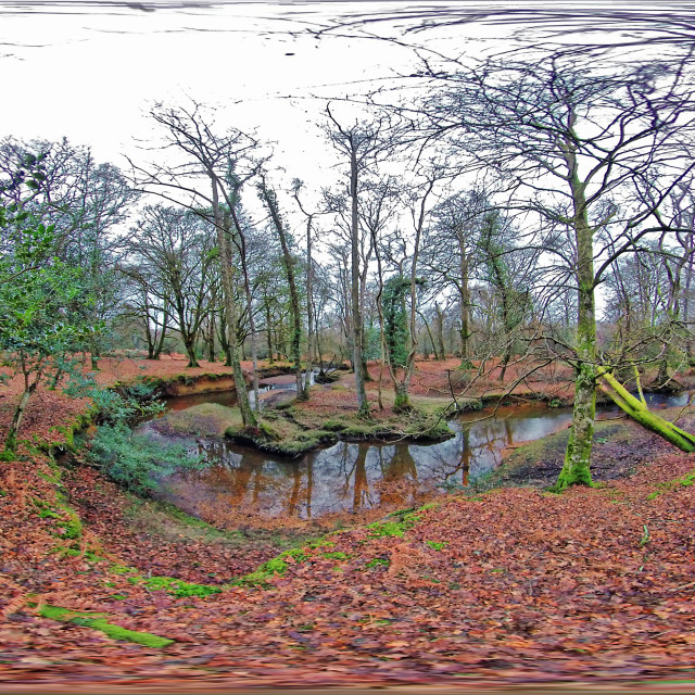 """""""Winding New Forest Stream in Winter (Equirectangular 360vr)"""" stock image"""
