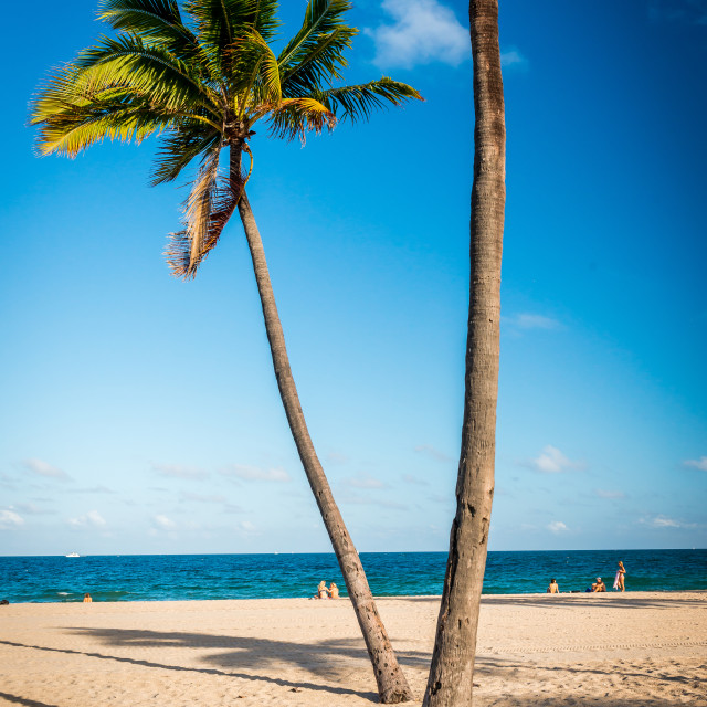 """""""Palm trees on the beach in Fort Lauderdale"""" stock image"""