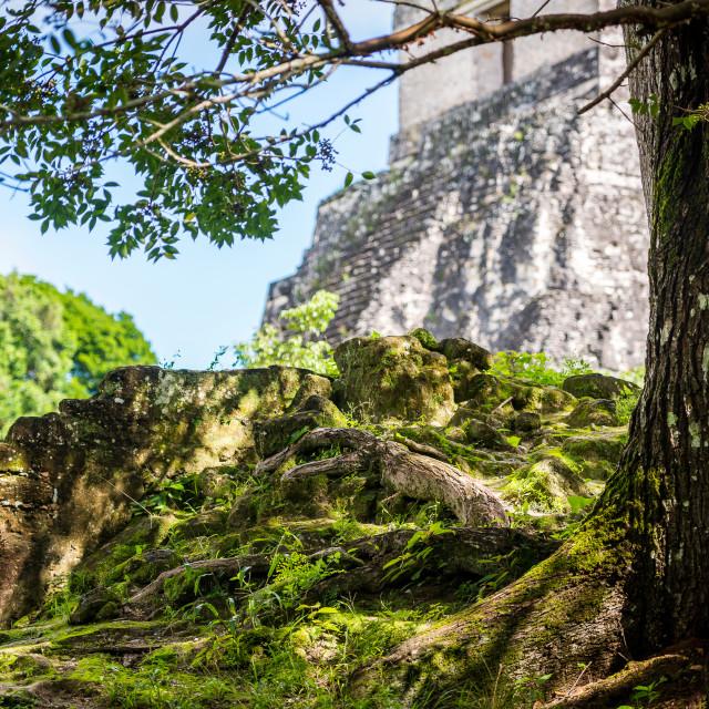 """Tikal Mayan ruins in Guatemala"" stock image"