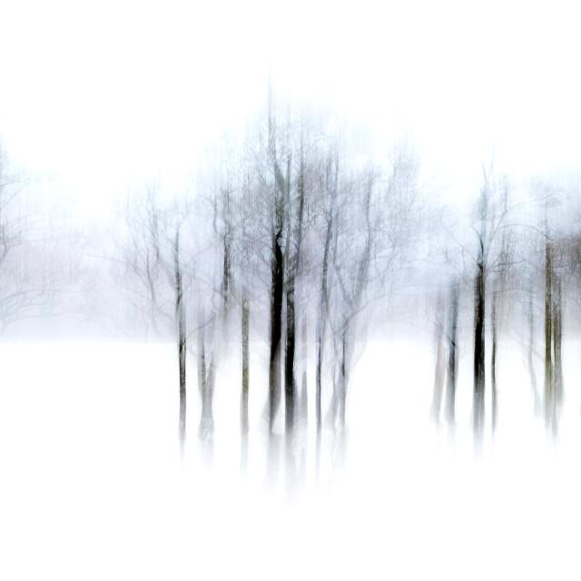 """""""Loch Tulla Trees"""" stock image"""