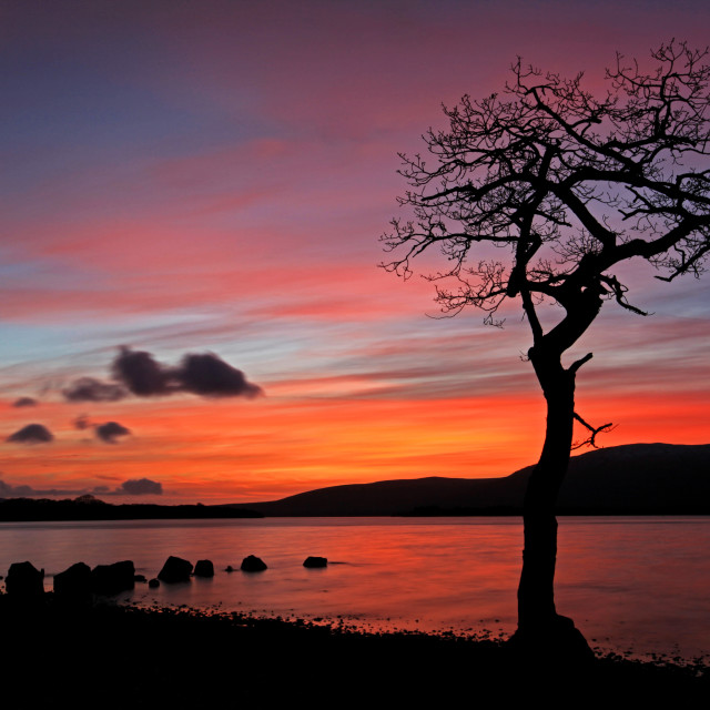 """The iconic tree in the waters of Loch Lomond"" stock image"