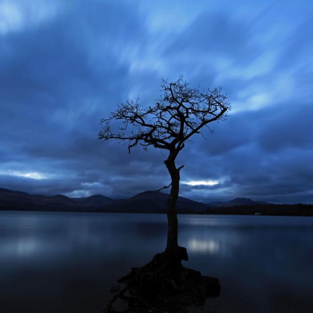 """The lone tree, Loch Lomond"" stock image"