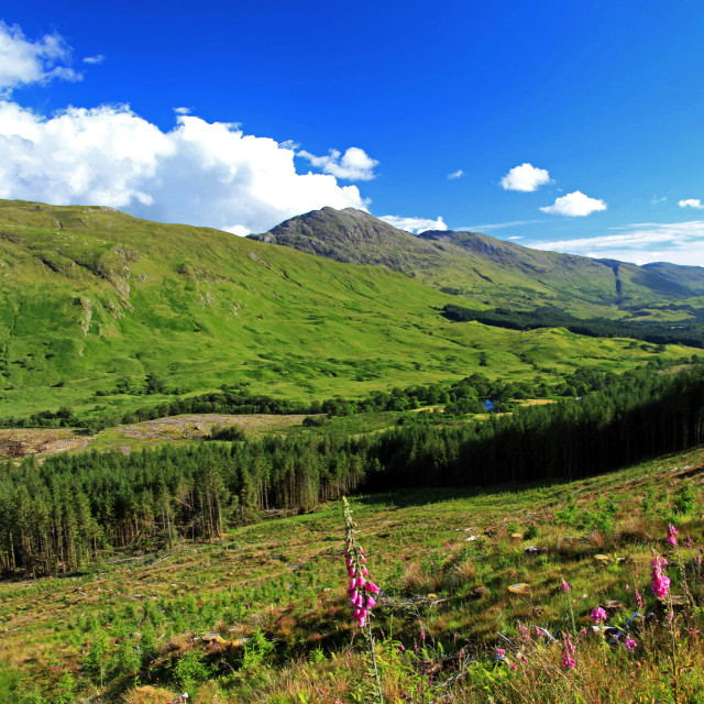 """View over Glen Creran forest & mountains"" stock image"