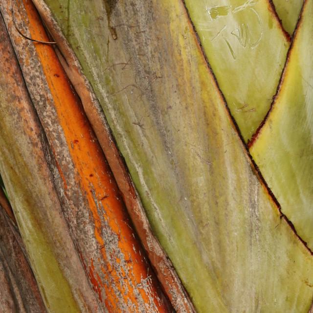 """tree texture - Orange and green"" stock image"