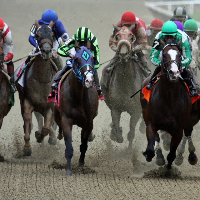 """""""Thoroughbreds on the Backstretch New York"""" stock image"""