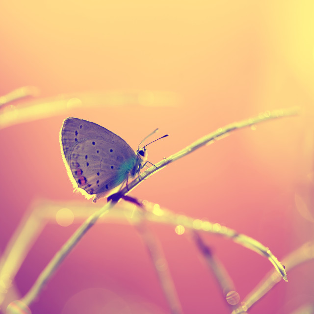 """A beautiful butterfly on an orange background, sitting and resting"" stock image"