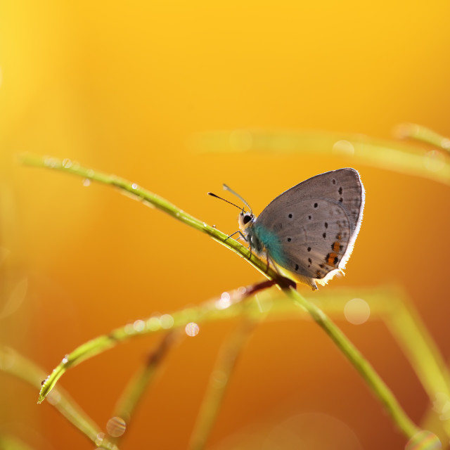 """""""A beautiful butterfly on an orange background, sitting and resting"""" stock image"""
