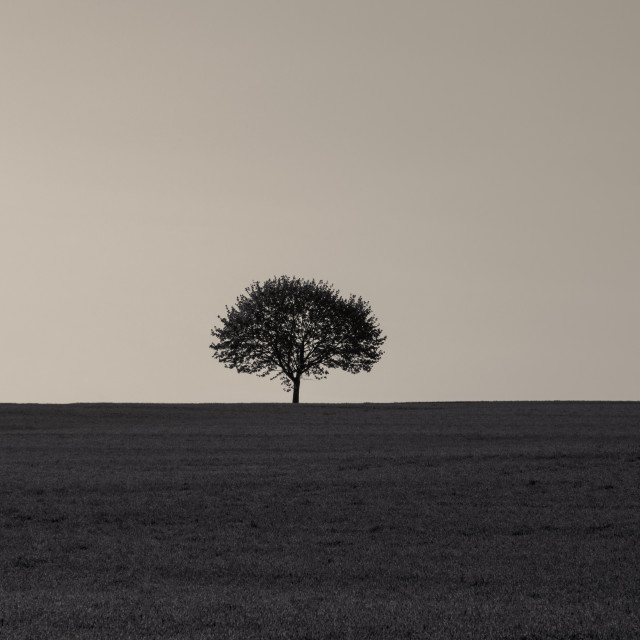 """Single tree on a grass field at sunrise"" stock image"