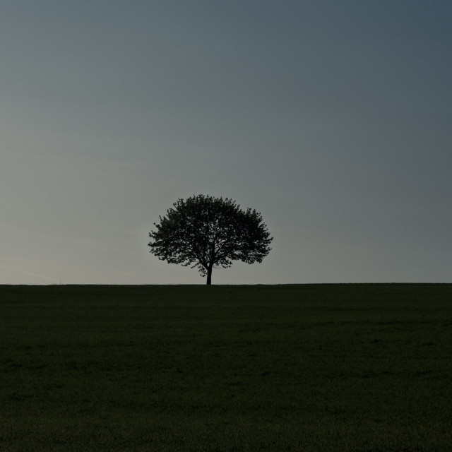 """Tree silhouette on an empty field"" stock image"