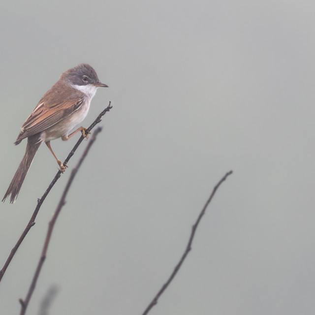 """Bird in mist"" stock image"