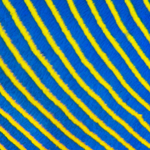 """Blue yellow diagonal fish stripes"" stock image"