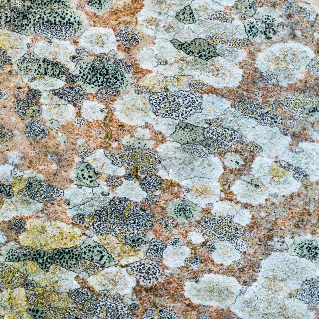 """Tree lichen pattern"" stock image"