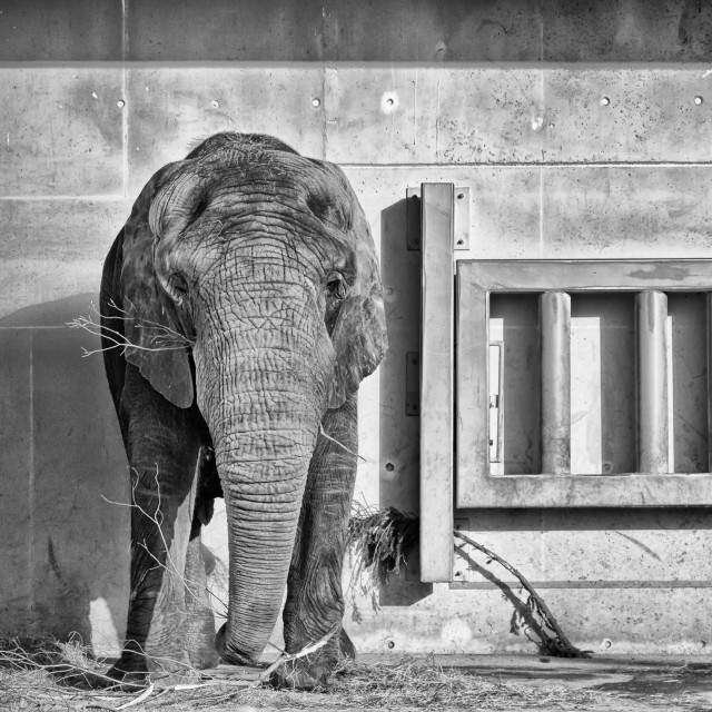 """""""Big Elephant In A Small Place"""" stock image"""