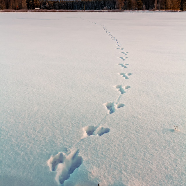 """""""Footprints On The Snow"""" stock image"""