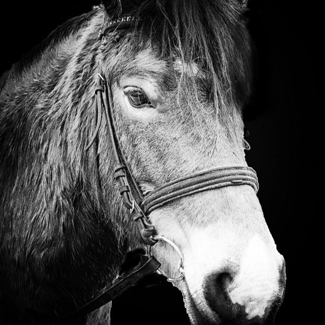 """Horse Head"" stock image"