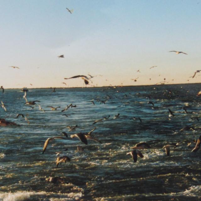"""Bird feeding time offshore"" stock image"