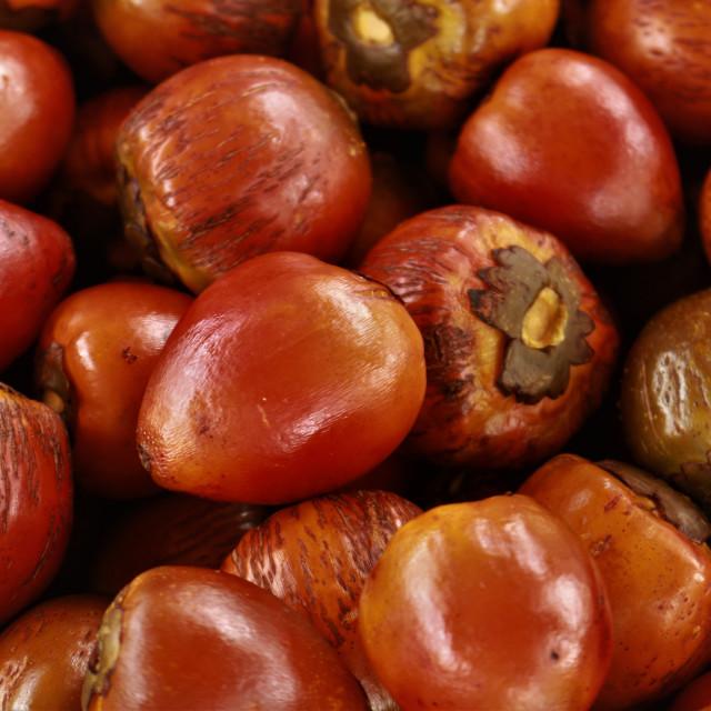 """""""Peach Palm Fruit - chontaduro"""" stock image"""