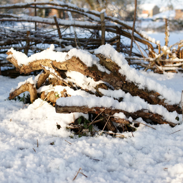 """Snowy log pile & fence"" stock image"