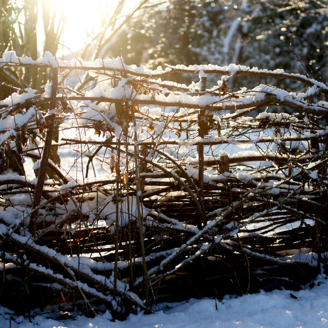 """Sunrise through snowy fence"" stock image"