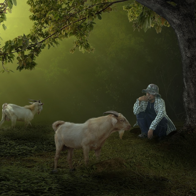 """""""Dramatic pic goat shepherd in the morning"""" stock image"""