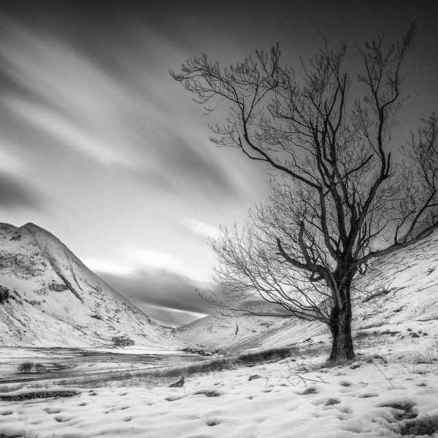 """Loch Achtriochtan Tree"" stock image"