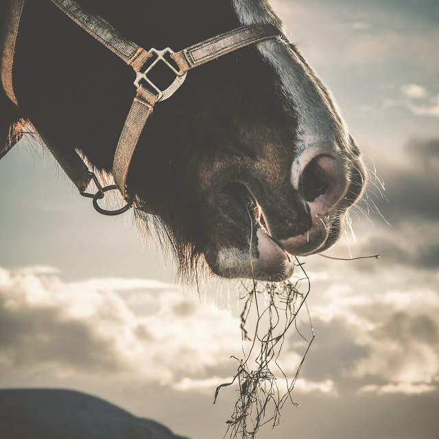 """Horse Eating Hay Portrait Image"" stock image"