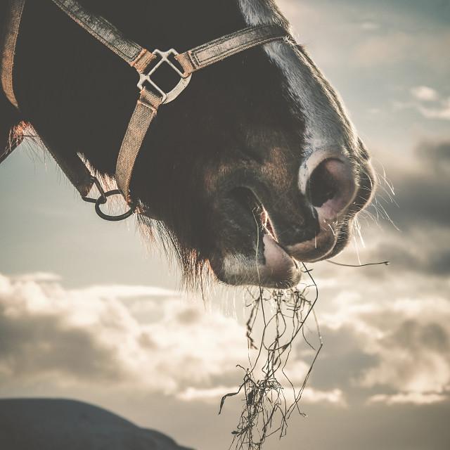"""Horse Eating Hay Portrait Image"" stock image"