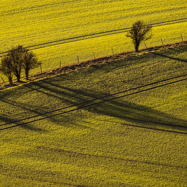 """""""Herts - Late Afternoon Shadows"""" stock image"""