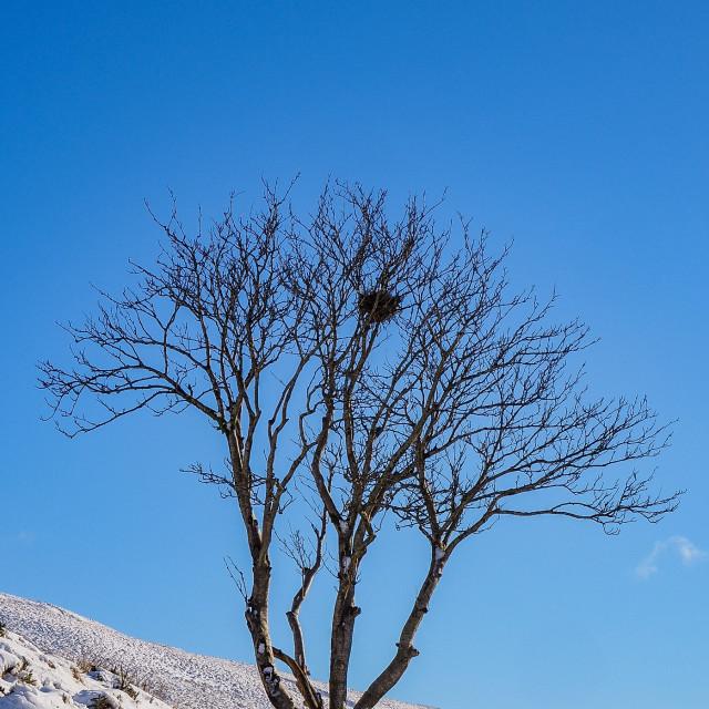 """The Lone Tree"" stock image"