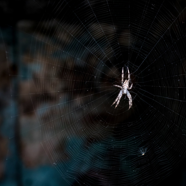 """""""Spider waiting for its prey"""" stock image"""