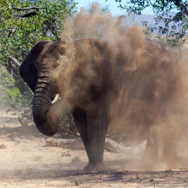 """Desert Adapted Elephants, near Doro Nawas"" stock image"