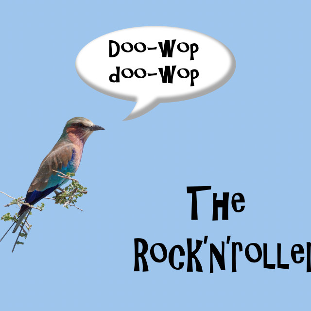 """""""Lilac-breasted roller (Coracias caudatus) sings rock and roll, making it a rock'n'roller."""" stock image"""