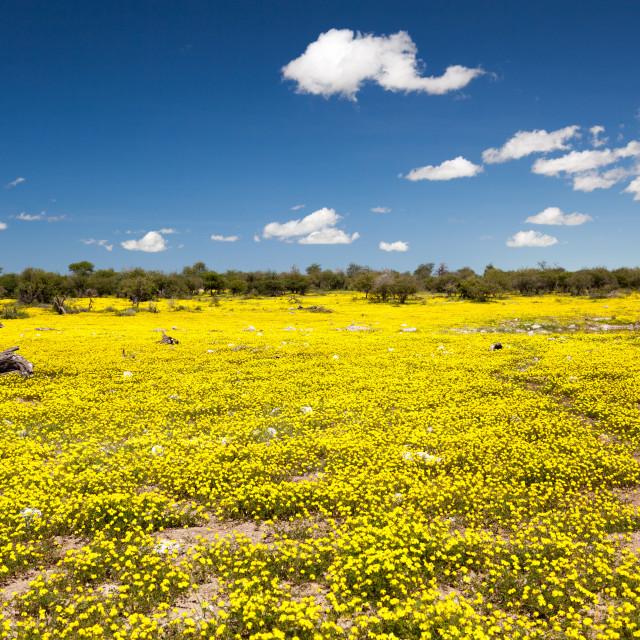 """""""Flowers, Etosha National Park"""" stock image"""