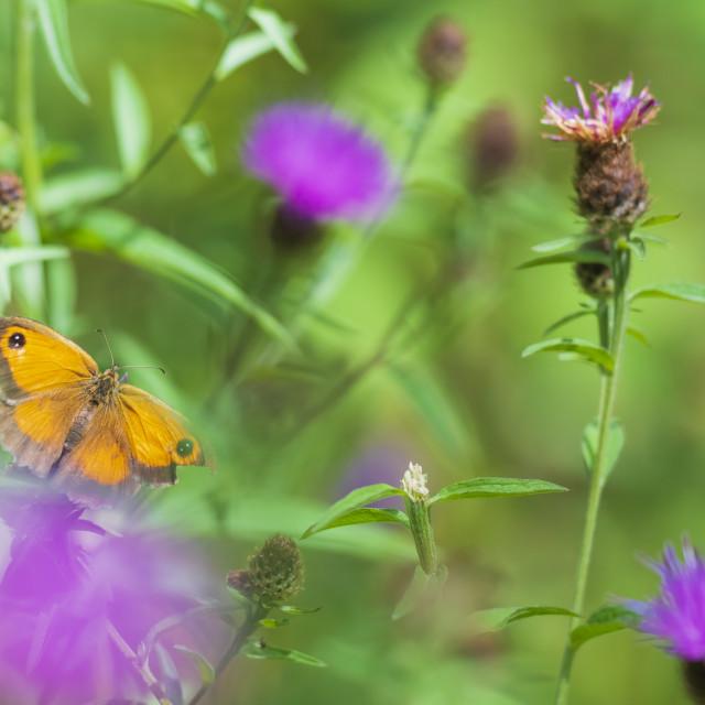 """""""Dreamlike butterfly"""" stock image"""