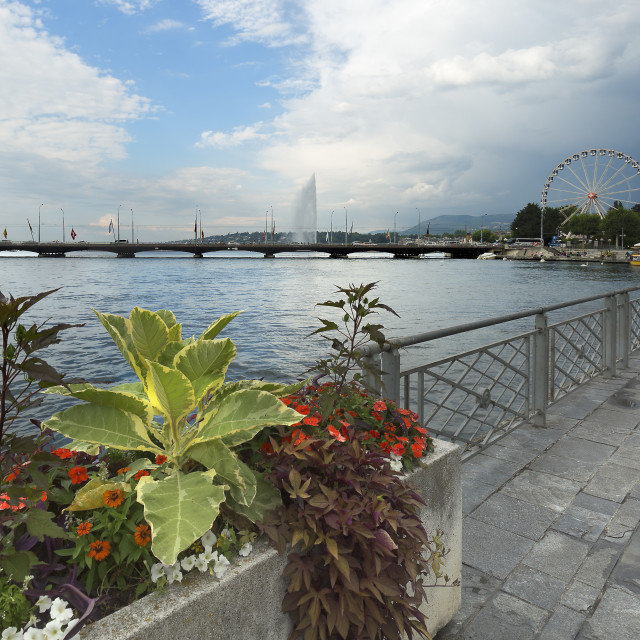 """""""Views of Lake Leman and Promemade du Lac, in the city of Geneva."""" stock image"""