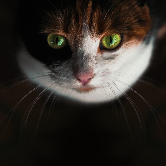 """""""Cats Face"""" stock image"""