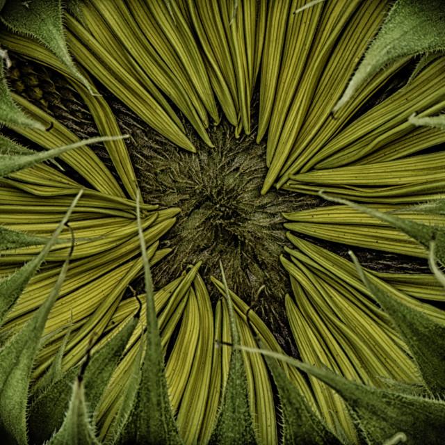 """In The Haunted Garden"" stock image"