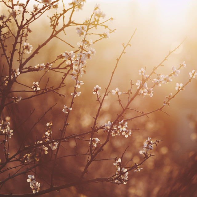 """""""Spring in nature"""" stock image"""