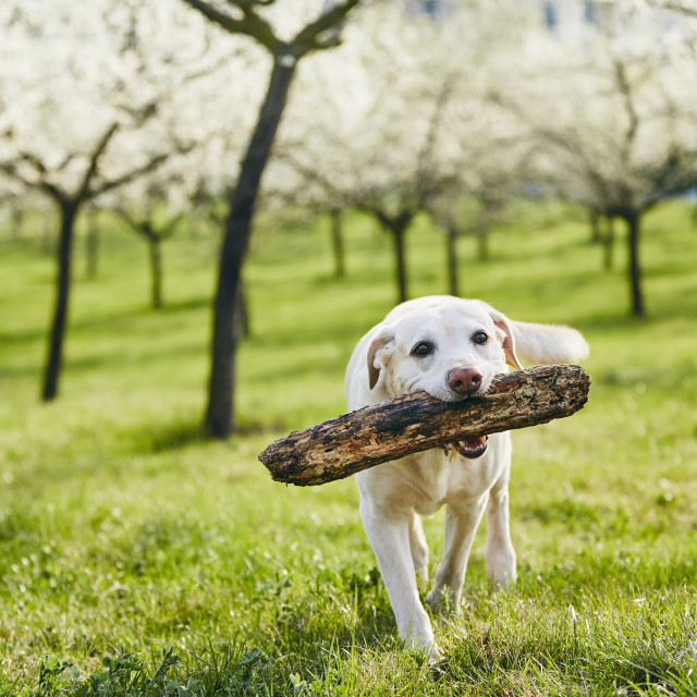 """""""Cheerful dog in spring nature"""" stock image"""