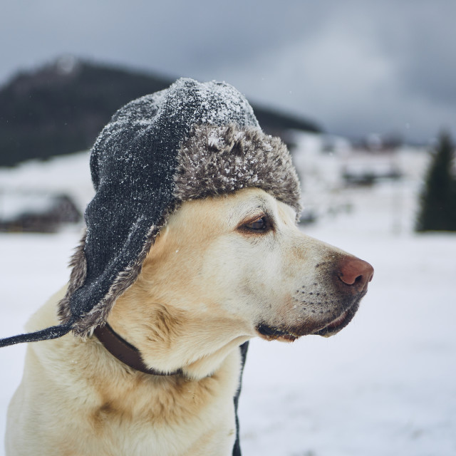 """""""Funny portrait of dog with winter cap"""" stock image"""