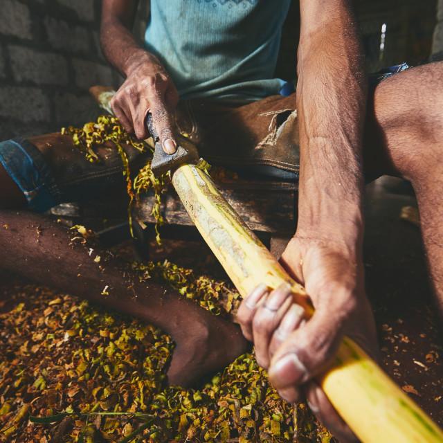 """Production of the cinnamon sticks"" stock image"